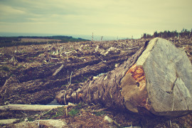 clearing-desolation-fallen-tree-4451