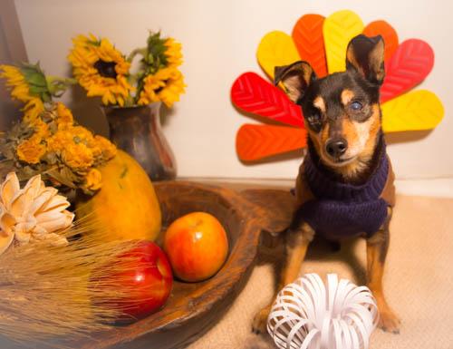 mre-happy-thanksgiving
